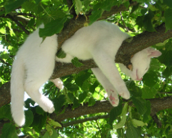 Cat stuck in a tree