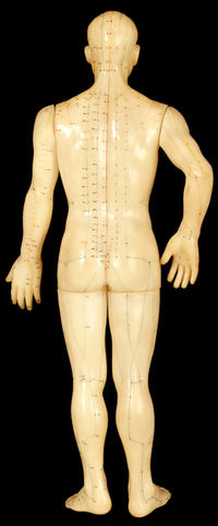 Acupuncture meridians of the back