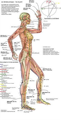 Acupuncture meridians, side view