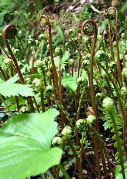Ferns unfurling: earth energy