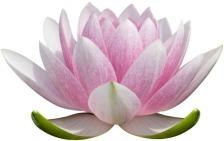 Image of lotus, symbol of spirituality