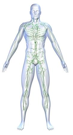 Illustration, lymphatic system