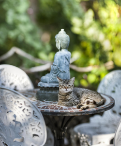 Buddha statue and cat in birdbath
