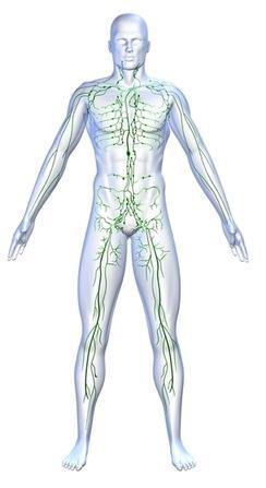 Illustration, lymphatic system