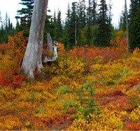 Autumn leaves on the Mountain